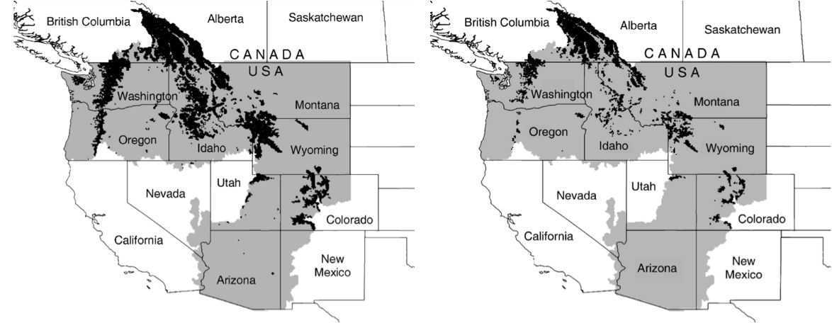 Figure 2. Historical wolverine habitat (in black) based on historical snowpack accumulation over the Western US (left). Projected areas of suitable habitat for wolverines (right) as a result of snowpack loss by the 2080s (an average of 63% reduction in habitat). Figure source: McKelvey et al. 2011.